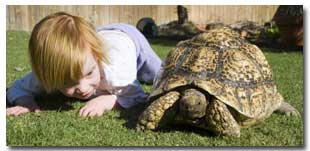 baby asks tortoise questions