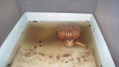 desert tortoise habitat