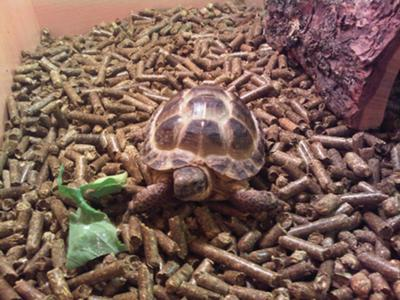 my tortoise.
