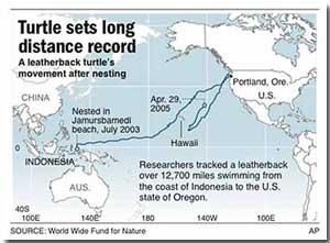 Leatherback Turtle Journey Map