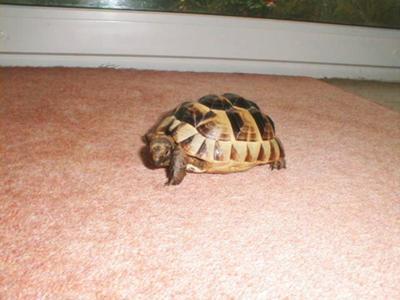 slighty lumpy shell
