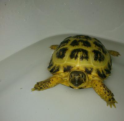 bath time <3