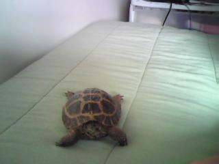 My Tortoise