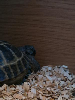 This is my tortoise sleeping