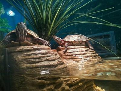 Sun turtles