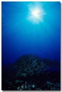 The sea turtle carriedUrashima Taro to the palace beneath the sea