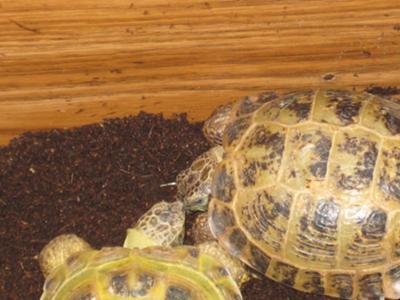 Tortoise Social needs?