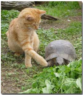 tortoise with cat