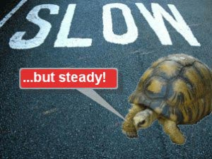 a tortosie is low but steady