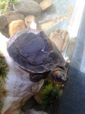 my turtle when it was alive.