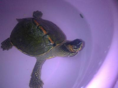 What is my turtle