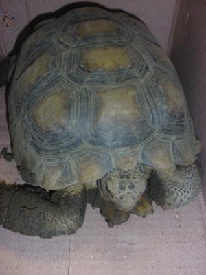 Which tortoise is this?