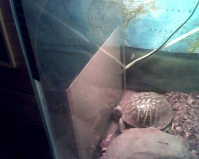 this is my tortoise