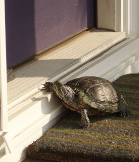 knockin on mama's door