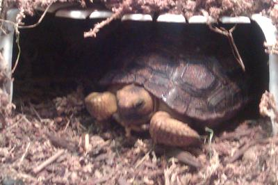 Torie peeking out from his hide!
